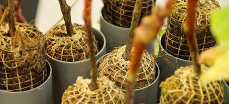 Προϋποθέσεις έναρξης λειτουργίας φυτωριακών επιχειρήσεων µητρικών φυτειών αµπέλου