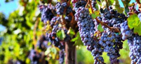 Κοντά στην ισορροπία μεταξύ προσφοράς και ζήτησης η παγκόσμια αγορά οίνου