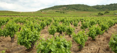 Εντάσεις μεταξύ παραγωγών και μεγάλων βιομηχανιών οίνου στην Ισπανία