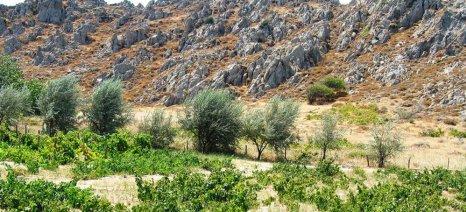 Αγροτική ανάπτυξη στα μικρά κυκλαδονήσια - ημερίδα