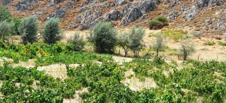 Τα καλύτερα κρασιά του Αιγαίου έρχονται στην Αθήνα στις 17 Ιουνίου