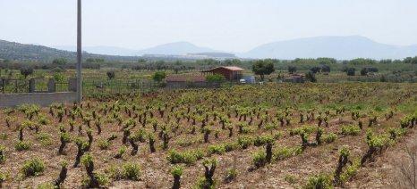 Ομάδα αγροφύλαξης δημιουργεί ο Συνεταιρισμός Κορωπίου