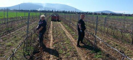 Μέχρι 1 Μαρτίου 2016 η Ελλάδα θα πρέπει να αιτηθεί τα νέα δικαιώματα φυτεύσεων αμπελώνων