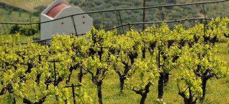 Το κρητικό κρασί «ταξίδεψε» στις ΗΠΑ