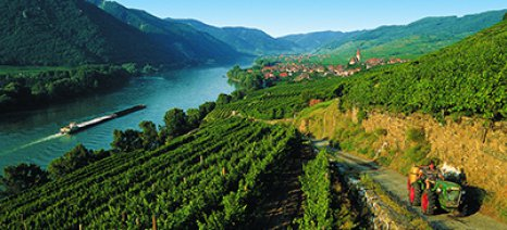 Παρά τον καύσωνα, η Αυστρία παράγει 2,5 εκατ. εκατόλιτρα κρασιού