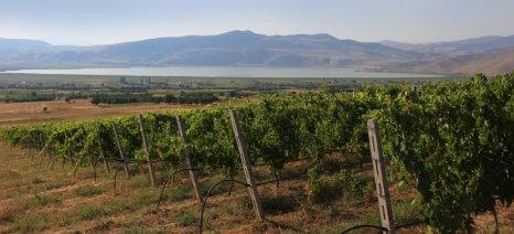 Εξαιρετική χρονιά το 2015 για τους οίνους του Αμυνταίου