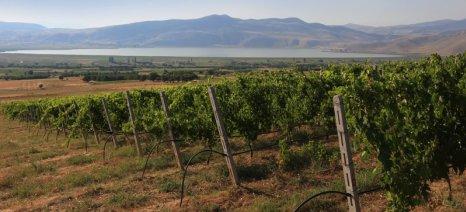 Μπόλαρης προς Χόγκαν: Αδικαιολόγητη η εξαίρεση των νέων φυτεύσεων από το πρόγραμμα αναδιάρθρωσης αμπελώνων