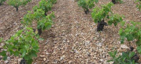 Με πυρήνα το Σαββατιανό ξεκίνησαν οι αθηναϊκοί Δρόμοι του Κρασιού