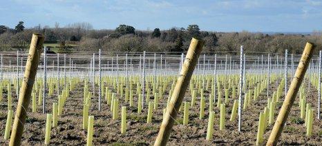 Αμπέλια: Οι Γάλλοι ζητούν δικαιώματα νέων φυτεύσεων πάνω από το πλαφόν που έχει οριστεί