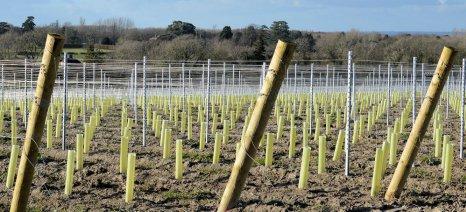 Ξεκινά η διαδικασία για χορήγηση αδειών φύτευσης νέων αμπελώνων για το 2016
