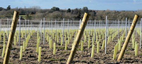 Αιτήσεις για άδειες νέων φυτεύσεων αμπελιών μέχρι τις 27 Μαρτίου