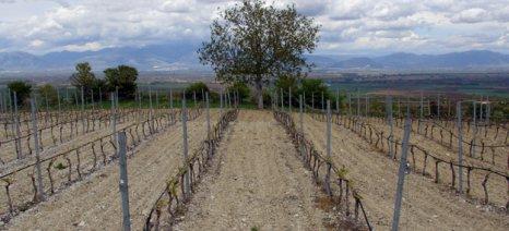 Θετική η Κομισιόν για νέες φυτεύσεις αμπελώνων με χρηματοδότηση από το ΠΑΑ