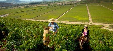 Εκτίμηση για 53 έως 57.000.000 εκατόλιτρα οίνου η σοδειά 2015 του Νοτίου Ημισφαιρίου