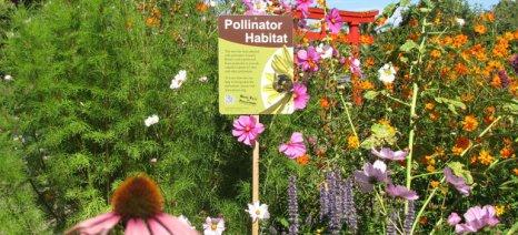 Ξεκινά εκστρατεία για μελισσόκηπους στα μπαλκόνια