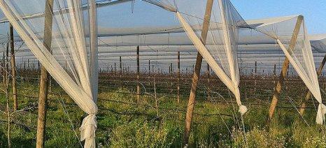 Εγκρίθηκε από τον ΕΛΓΑ η εγκατάσταση αντιχαλαζικών σε 2.900 στρέμματα ύψους 3 εκατ. ευρώ