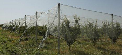 Αύξηση του ποσοστού χρηματοδότησης αντιχαλαζικών διχτυών για νέους γεωργούς