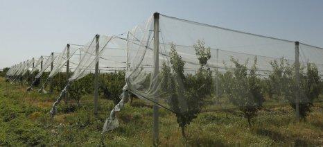 Ανοιχτό μέχρι το τέλος του 2016 θα μείνει το πρόγραμμα επιχορήγησης αντιχαλαζικών διχτυών του ΕΛΓΑ