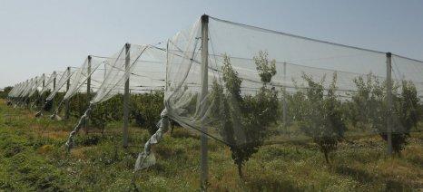 Αύξηση εισφοράς ΕΛΓΑ στις φιστικιές, μείωση στα δέντρα με αντιχαλαζικά