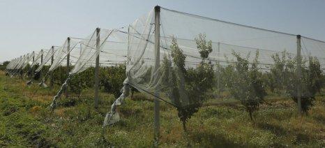 Εγκρίθηκαν από τον ΕΛΓΑ οι εγκαταστάσεις αντιχαλαζικών διχτυών από 69 παραγωγούς ύψους πάνω από 1 εκατ. ευρώ