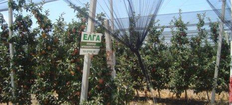 Ημερίδες για την επιδότηση αντιχαλαζικών διχτυών από τον ΕΛΓΑ σε Ημαθία, Κοζάνη και Θεσσαλονίκη