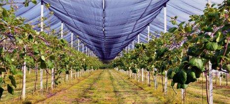 Στέβια, ακτινίδια, δαμάσκηνα και αρωματικά φυτά προτείνει ως εναλλακτικές στον καπνό η Ένωση Αγρινίου