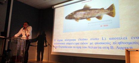 Με εξαφάνιση κινδυνεύει η άγρια πέστροφα της Αράπιτσας στην Ημαθία