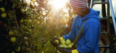 Πάνω από 5.500 αλλοδαποί εποχιακοί εργάτες απασχολούνται ετησίως στην Καστοριά