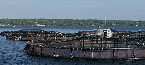 Αιτήσεις για το πρόγραμμα επενδύσεων στις υδατοκαλλιέργειες μέχρι 29 Μαΐου