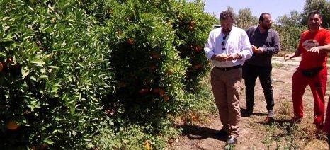 Τα χωράφια με τα αδιάθετα πορτοκάλια στη Σκάλα Λακωνίας επισκέφθηκε ο Αραχωβίτης