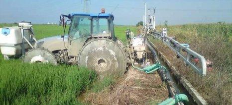 Ψάχνει την ανατροπή φέτος το ρύζι - Βελτίωση τιμών αναμένουν οι παραγωγοί