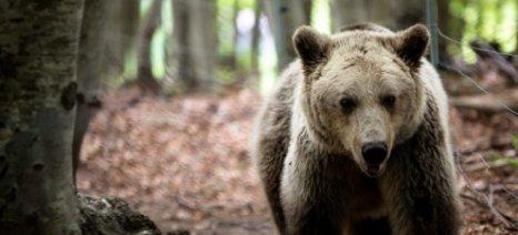 Αρκούδα κατέστρεψε μελισσοκομείο στα Ιωάννινα