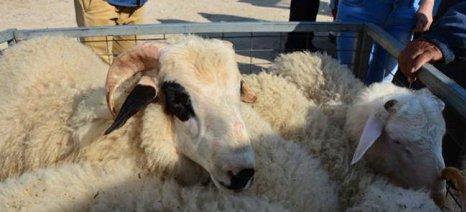 Ζημιές στις κτηνοτροφικές μονάδες της Δράμας από την κακοκαιρία