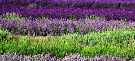 Φαρμακευτικά φυτά και εφαρμογές τους στην σύγχρονη ιατρική