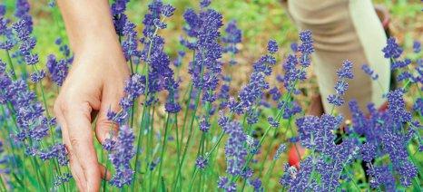 Σχολεία αγρού για αρωματικά φυτά στον Έβρο