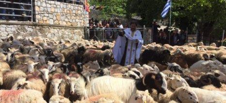 Αναβίωσαν έθιμα των κτηνοτρόφων ανήμερα του Αγίου Γεωργίου στην Κρήτη