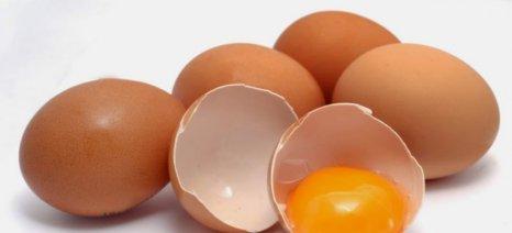 Ερώτηση Κασαπίδη για το διατροφικό σκάνδαλο με τα μολυσμένα αβγά