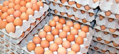 Το Ισραήλ θέλει να εισάγει ελληνικά αυγά