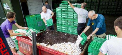 Σε 33 εκατ. ευρώ εκτιμά η ολλανδική κυβέρνηση τις ζημίες από το σκάνδαλο με τα μολυσμένα αυγά