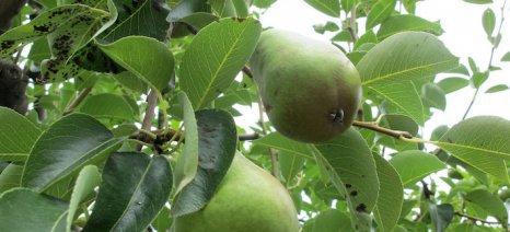 Χειμωνιάτικες εργασίες φυτοπροστασίας για τις μηλιές και τις αχλαδιές