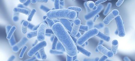 Έλληνας επιστήμονας στο Χονγκ Κονγκ ανακάλυψε ότι τα προβιοτικά καταπολεμούν το ηπατοκυτταρικό καρκίνωμα