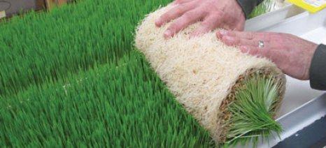 """Τρεις επιχειρηματικές προτάσεις στον αγροτικό τομέα προκρίνονται στο """"Η Ελλάδα καινοτομεί"""""""