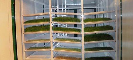 Υδροπονικό φύτρο κριθαριού για λιγότερη εξάρτηση από τη σόγια