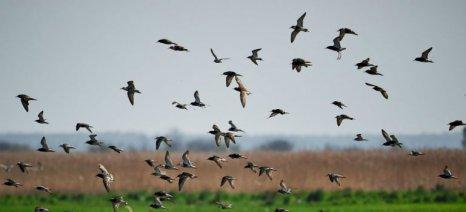 Οι 750 δικαιούχοι που εντάσσονται στην προστασία της άγριας ορνιθοπανίδας