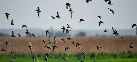 Οριστικοποιήθηκαν οι δικαιούχοι της δράσης για την «Προστασία της άγριας ορνιθοπανίδας»