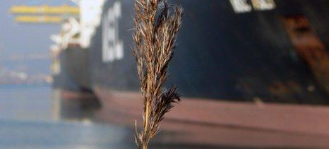 Δασμούς στις εξαγωγές των σιτηρών αποφάσισε να επιβάλει η Ρωσία