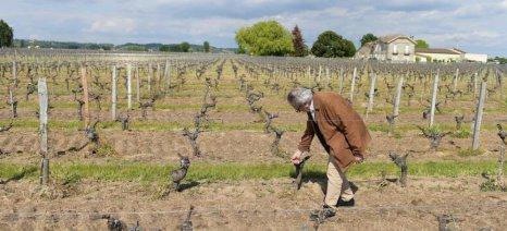 Οι δύο παγετοί του 2017 μείωσαν την παραγωγή κρασιών του Μπορντό κατά 40%