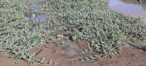 Πύργος: Χάθηκε η πρώιμη παραγωγή καρπουζιού από χαλαζόπτωση