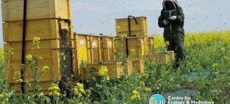 Έρευνα που δημοσιεύθηκε στο Science δείχνει και αρνητικές επιπτώσεις των νεονικοτινοειδών στις μέλισσες - η Bayer την αμφισβητεί