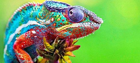 Έρευνα αποκαλύπτει γιατί αλλάζει χρώμα ο χαμαιλέων