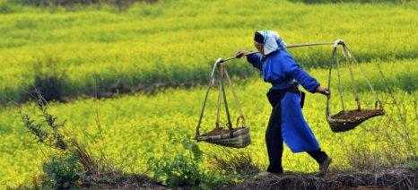 Μείωση 50% του αγροτικού πληθυσμού της Κίνας